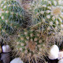 Kaktus - dies ersten Stachel kratzen an der Linse - 28mm mit Markro Stufe 2