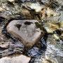 Herzstein im Wasser - Almbach - Berni