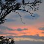Juli 2012, Kauz in Sonnenuntergang, Bild: Hengsten