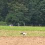09.06.2012 auf der Floethütte, Bild: Hengsten