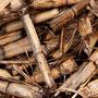 Biomasse-Energie