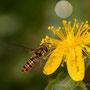 insecte? en cours d'identification
