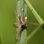 araignée en cours d'identification