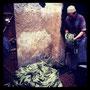 fasern aus agaven - fast wie seide
