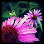 blütendetails