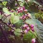 herrlicher duft einer zitruspflanze in fes