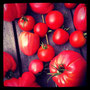 tomaten sind reif