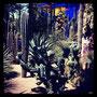 ein paradiesgarten für die sinne