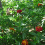 Цветы (автор - Е.Будруева)