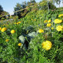В огороде (автор - Н.Королёва)