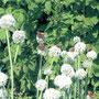 Бабочки летают...(автор - А.Алатин)
