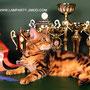 MAGICCASTLE RAHAT LUKUM OF LAMPARTY BEN n 22