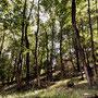 Der Wald von Brisino.