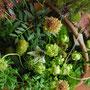 Flower Arrangement 30