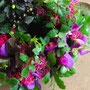 Flower Arrangement 39