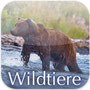 Wildtiere Kanada