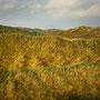 Dunes 2