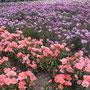 様々な種類の花がずらり