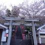 ちょうど桜が満開。桜吹雪が美しい。