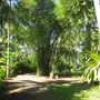 Bali beachfront land for sale by owner.