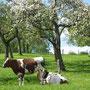 REWE Koll Regional - Traditionelle und ökologische Landwirtschaft