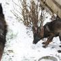 30 januari 2012 - Quisha Chenna vom Grubenländer Schupo - Sneeuwpret