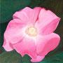 Juister Rose  2005,  Acryl auf Leinwand 40x40 cm