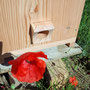 ruches pour jardin