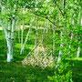 白樺の林とHimmeli。