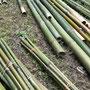 竹の伐採は、3月に行いました