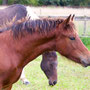 Labhraoloinsigh Church Lady, filly with very old and established bloodlines.