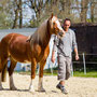 Horeb Welsh Maid (Horeb Euros x Trefaes Ballet Queen) as an 8 year old. Picture taken by Stefan Porschen on the first warm day in April.