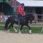 """Gwynfaes Bendigeidfran (6 years of age) at work. Very attentive and commited as he is, he proves that the so called """"Show Lines"""" are indeed promising to produce useful animals for various equestrian disciplines."""