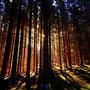 ein schöner Spaziergang durch die Bergwälder des Jogllandes