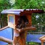 ...die Waschbären am Rastplatz....