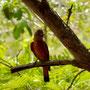 un oiseau jaune