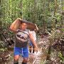 Holzbeschaffung im Regenwald