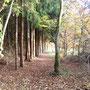 Der Weg führte sie an einer Reihe Fichten vorbei und dann links immer weiter dem Tal entgegen, aus dem eine frische Kühle heraufkroch.
