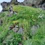 Alte Grashäuser