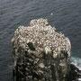 Vogelfelsen im Meer