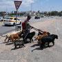 Hundesitter - zigfach gesehen
