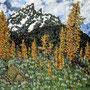Jenny Lake Camp Grand Tetons 24x30