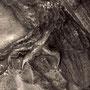 アカシアモリフクロウ打ち出し-Strix rufipes-