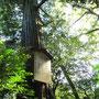 島根、須佐神社 ヤマタノオロチを倒した須佐之男命の御魂を鎮めた地で有名。 本殿裏側にある樹齢千四百年のご神木。 Susa Shrine known as a part of stages of Japanese myth in Shimane prefecture