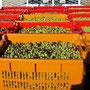 Caisse d'olives vertes