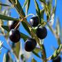 Olives mûres