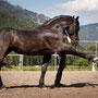 © RossFoto Dana Krimmling - Theo Blaickner - Pferdefotografie - Fotografie vom Wanderreiten - Jagdreiten - Steinadler - Falkner