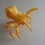 踊る黄色いクモ/2004_2013
