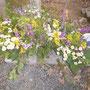 die Blumen werden verschenkt