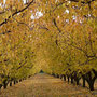 French language holidays, automne - fall - Herbst